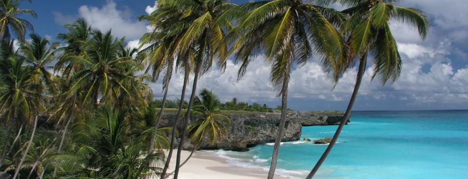 Sample Slide Palm Trees